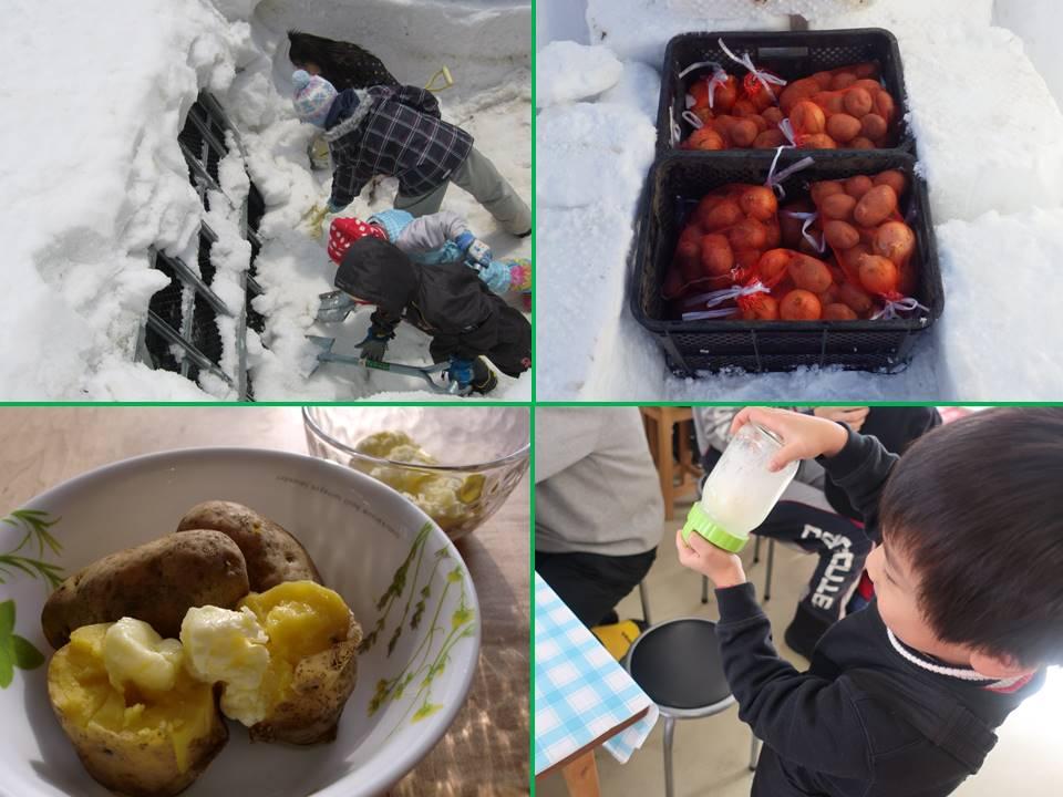 雪まつり企画 雪中じゃがいもを掘り出して 手作りバターで食べよう