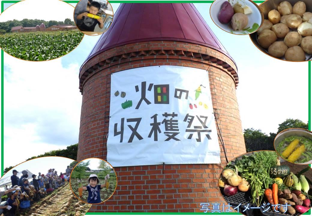 【畑の収穫祭】旬の野菜を収穫して畑で食べよう