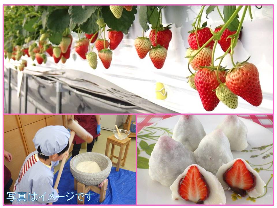 【雪まつり企画】いちご収穫ともちつきをして大福を作ろう