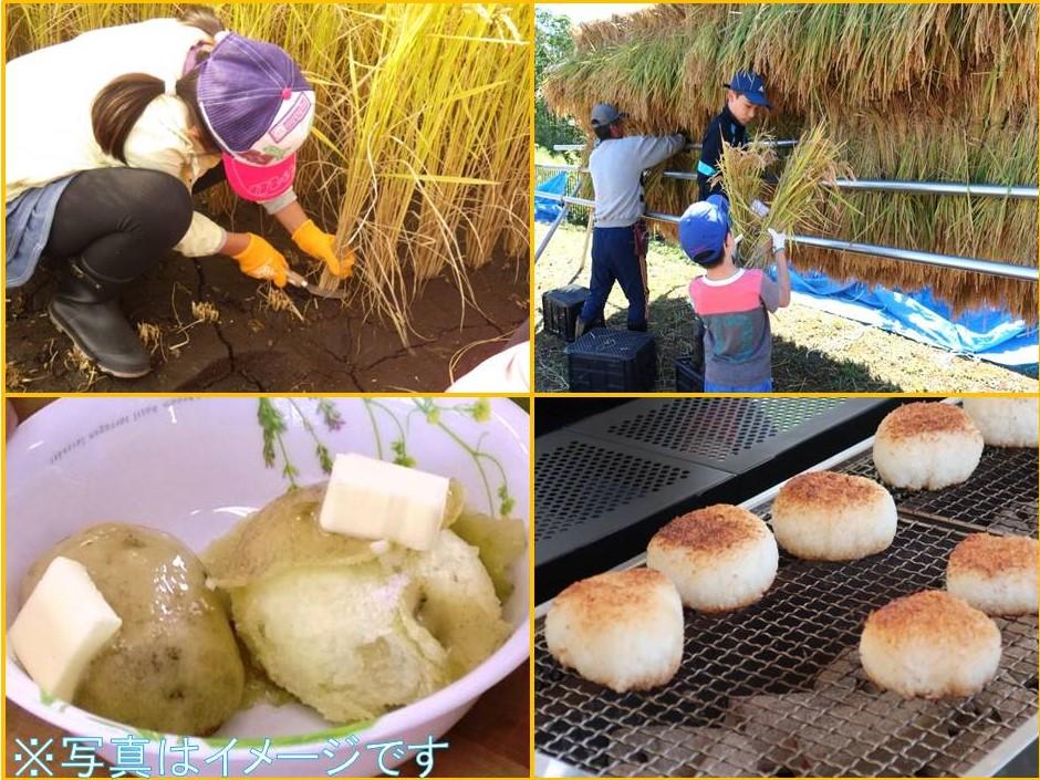 稲刈りをして焼きおにぎりを作って食べよう(旬野菜の収穫付)