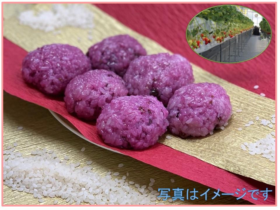 【ひな祭り企画】ハスカップで桜餅風おはぎを作ろう (いちご収穫付)