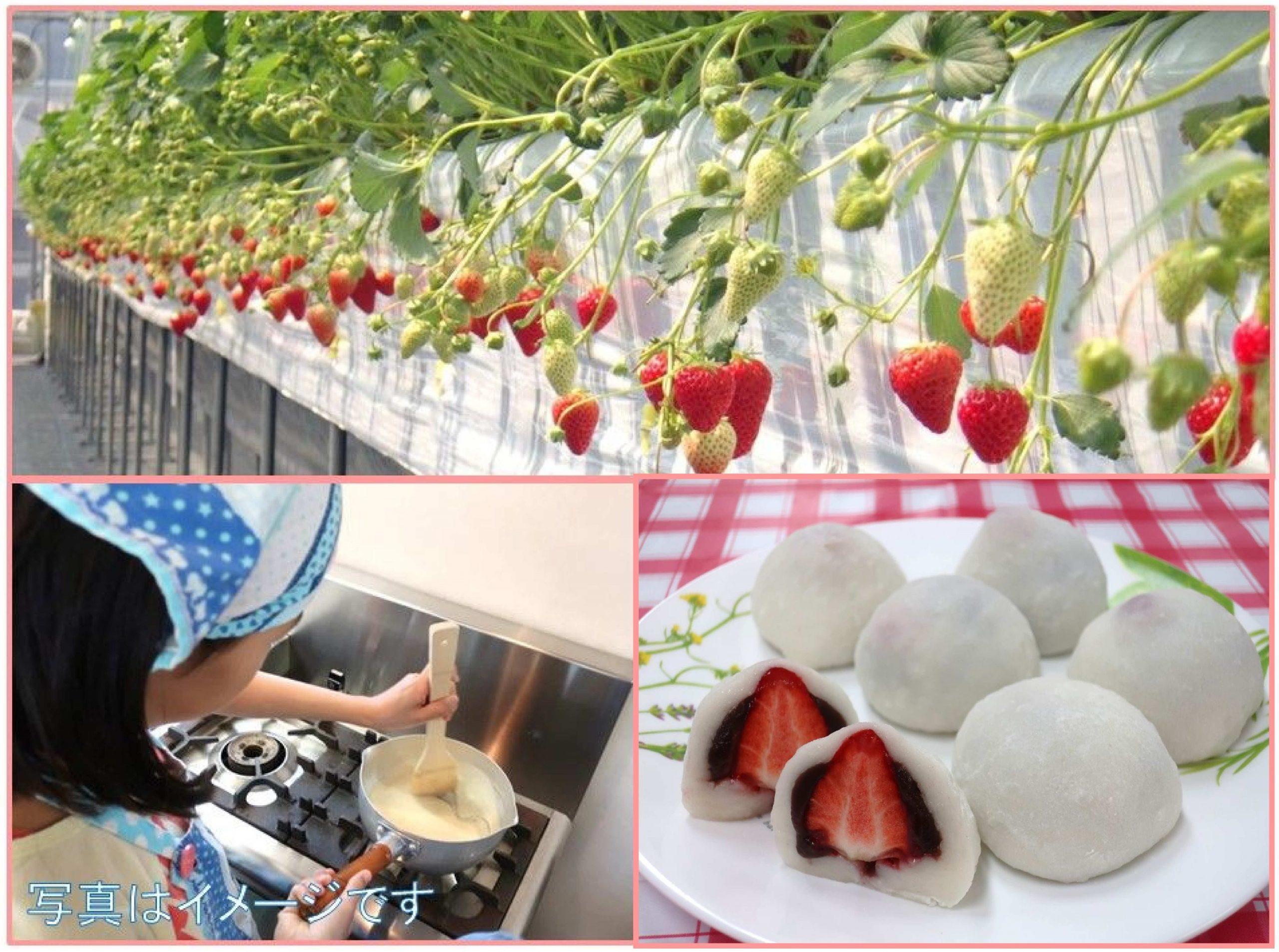 白玉粉でいちご大福を作ってみよう