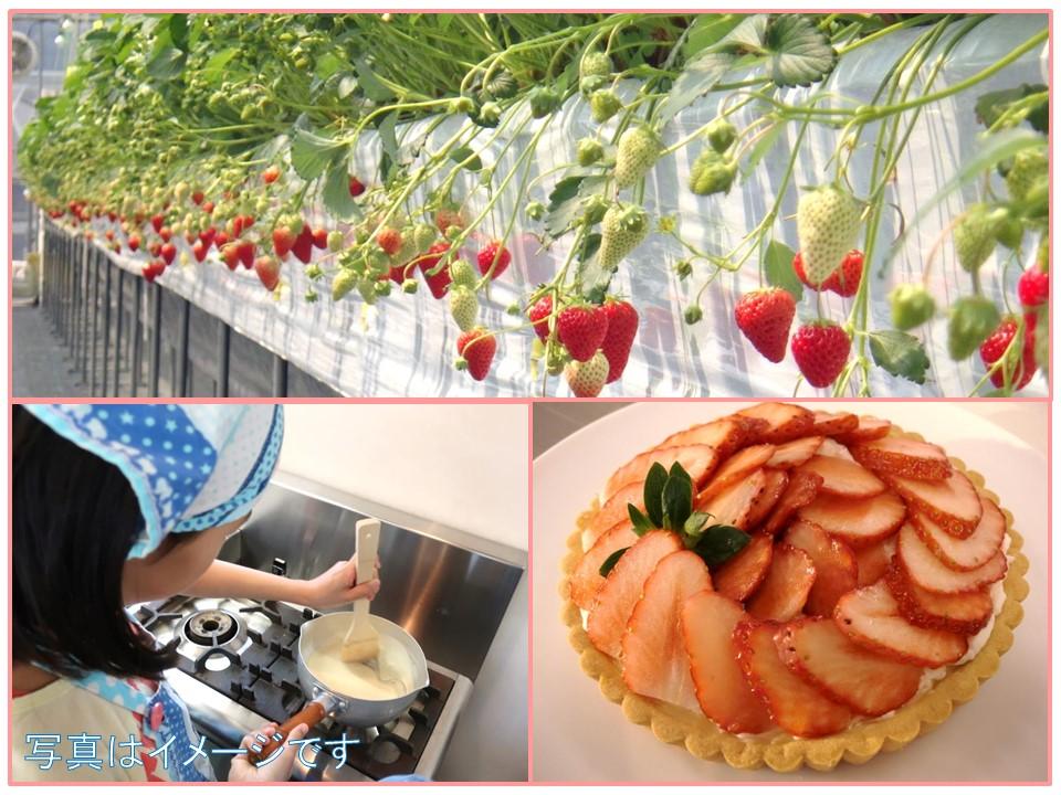 【母の日企画】いちごを収穫してタルトを作ろう