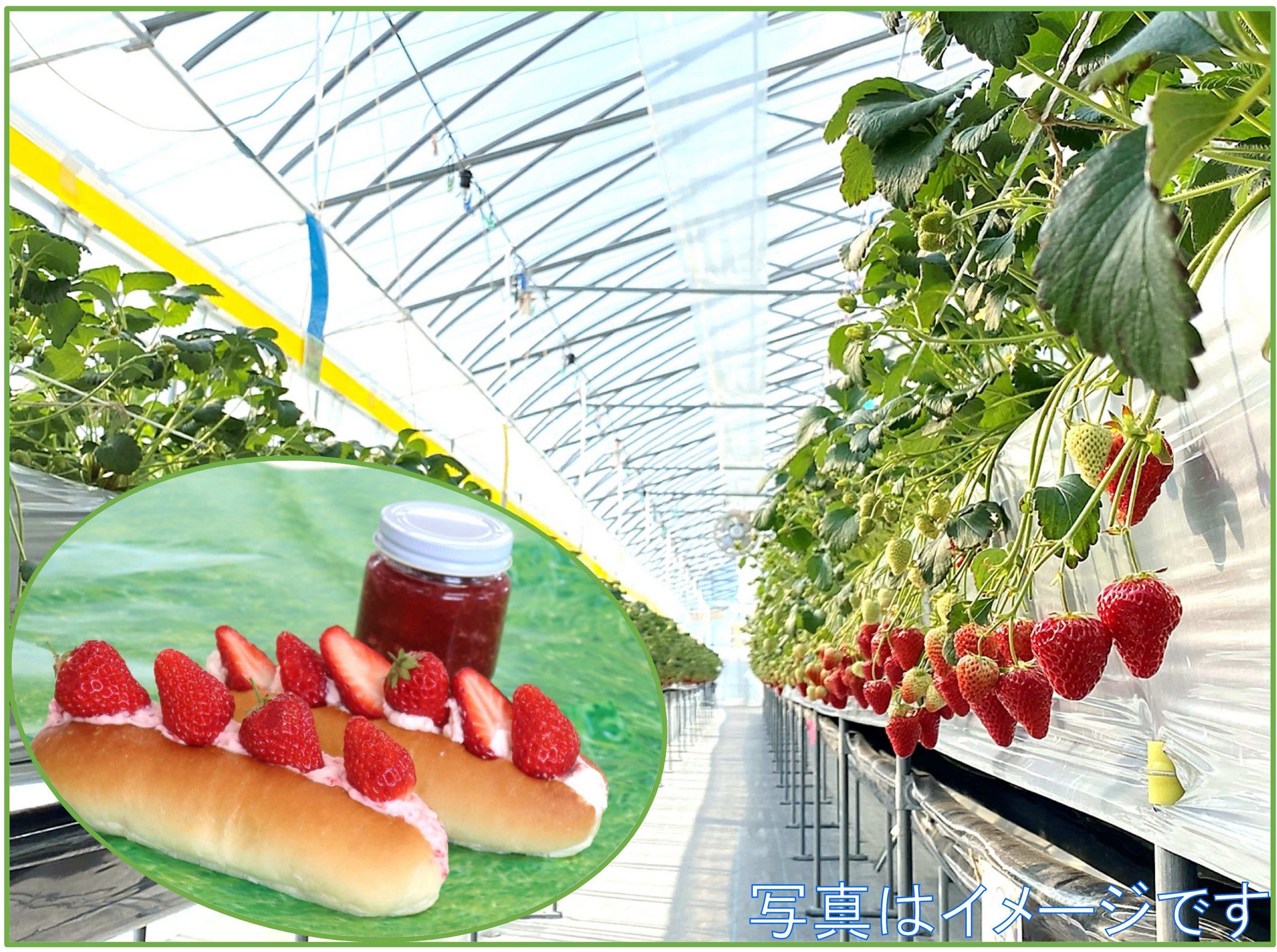 【GW企画】 いちごを収穫してジャム作ろう(コッペサンド付)