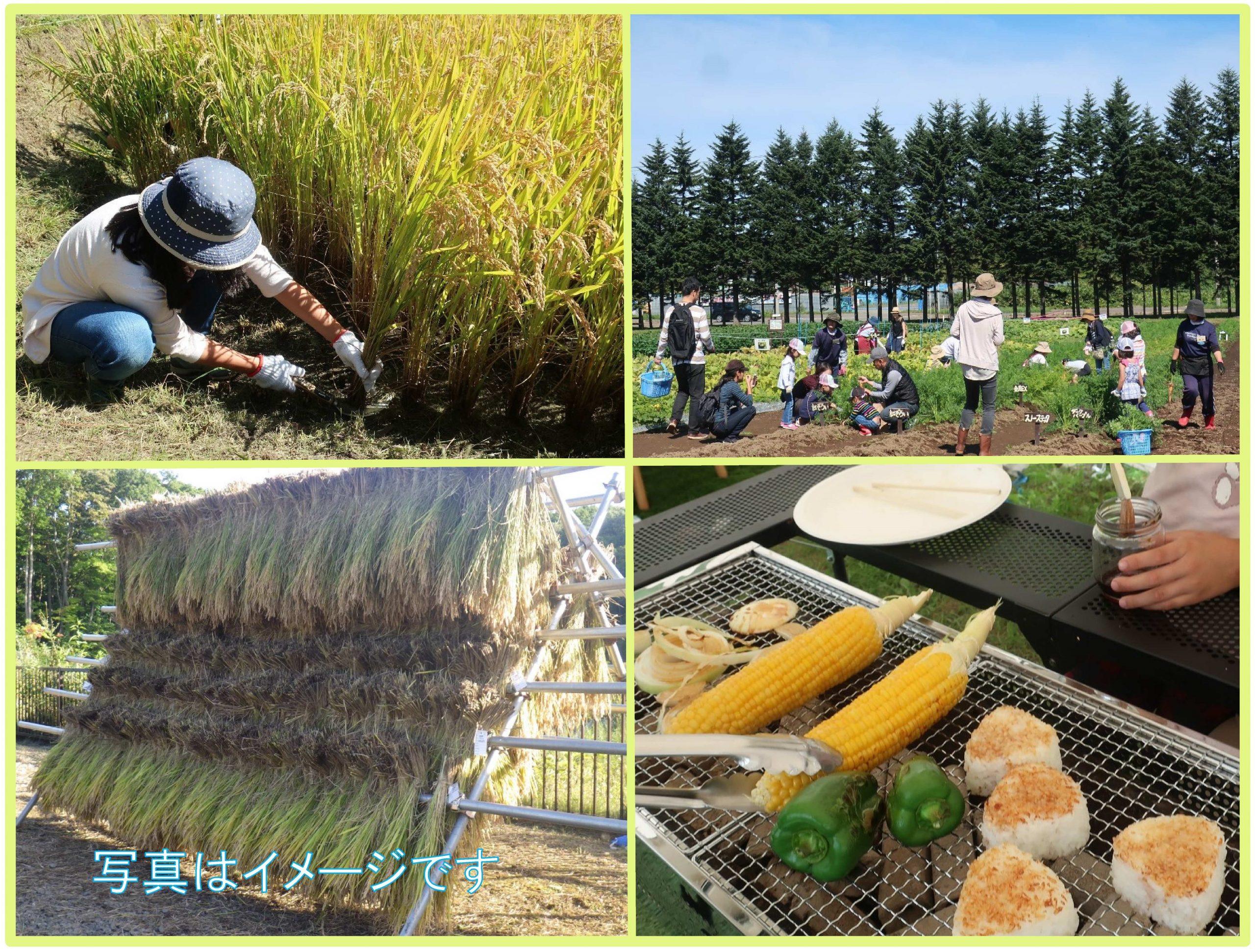 稲刈りをして焼きおにぎりを作って食べよう (旬野菜の収穫付)