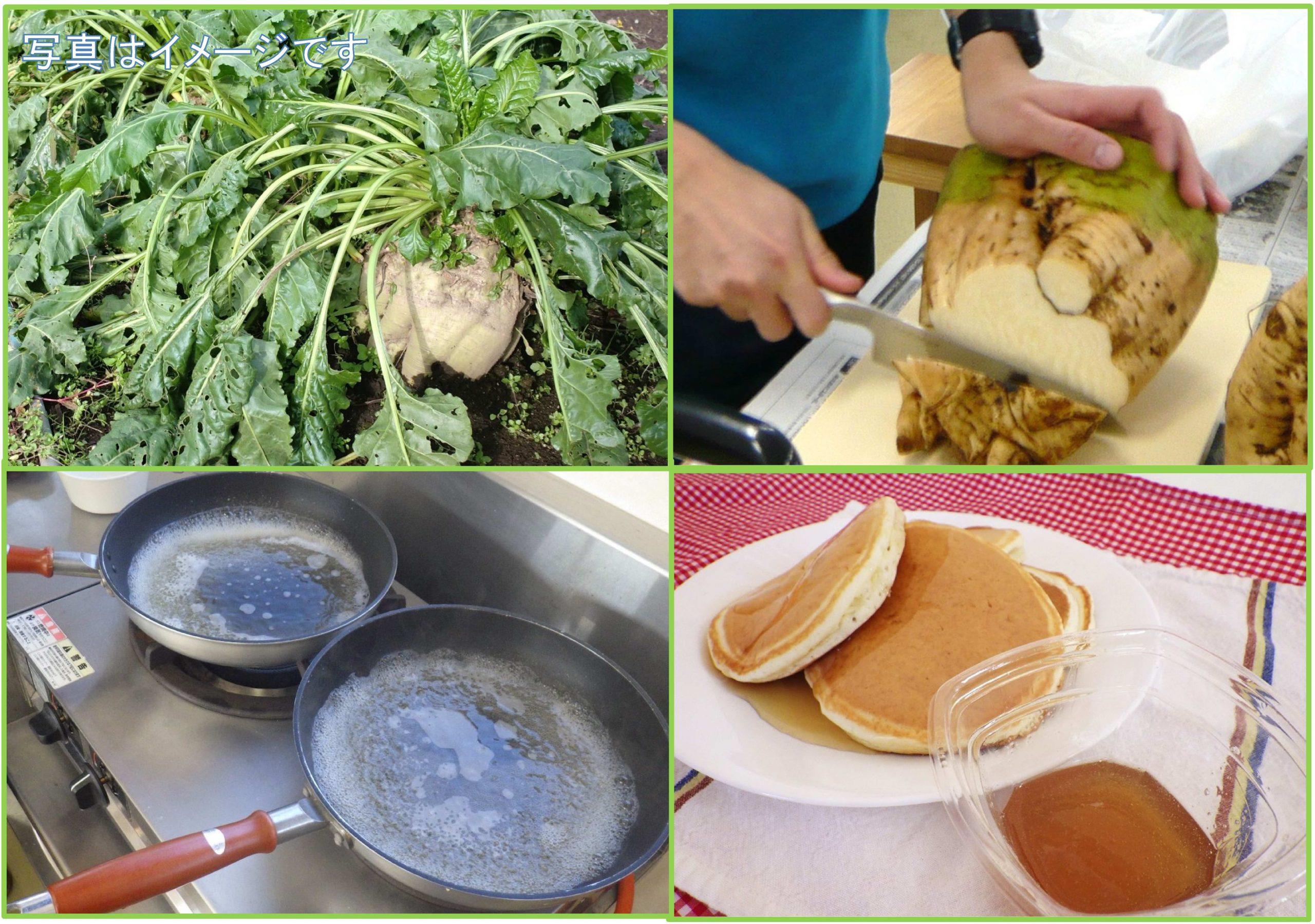 てん菜を収穫してシロップを作ろう (ホットケーキ付)